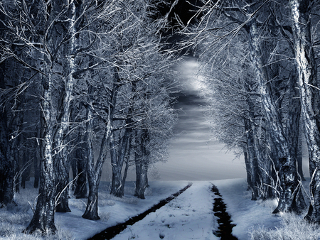winter night: Forest road on a winter night
