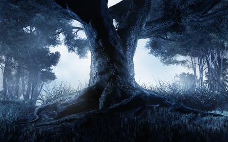 暗い森の中の大きな木