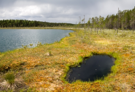 An overgrowing shore of a wilderness lake in Finland