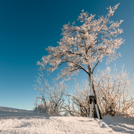 standstill: A pair of skis standing against a snow-covered tree on a cold winter day