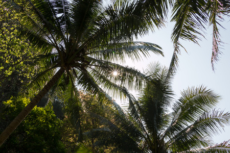 ding: Sun shining throug canopies of coconut palms in a tropical forest at the island of Koh Lao La Ding, Thailand.