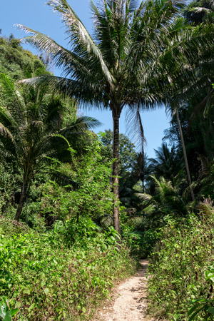 ding: A path leading through tropical island with coconut palms at the island of Koh Lao La Ding, Thailand.