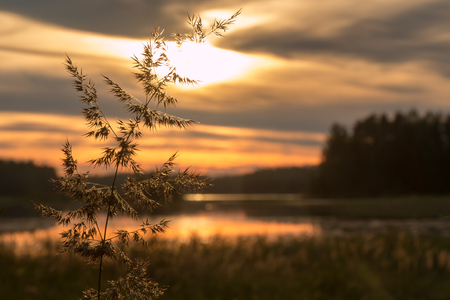 lake sunset: Close-up shot of a bushgrass spike with sunset lake in the background Stock Photo