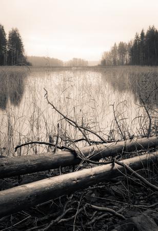 arboles secos: �rboles muertos que mienten en una orilla de un lago en oto�o, Sepia cambiante paisaje blanco y negro. Foto de archivo