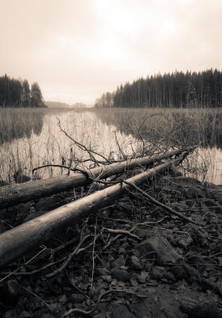 arboles secos: Árboles muertos que mienten en una orilla de un lago en otoño, Sepia cambiante paisaje.