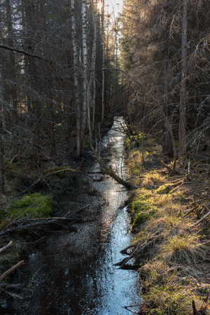 draining: Straght draining ditch in a Nordic wetland forest in Finland with dead trees around.