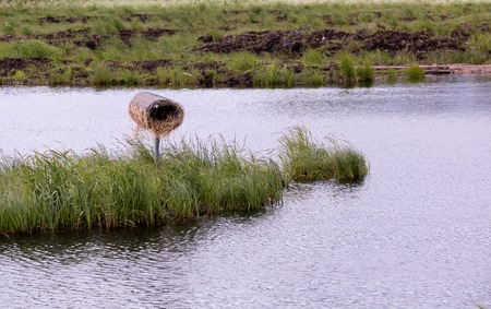 Artificial duck nesting box at an eutrophic water treatment wetland in Finland. Stock Photo