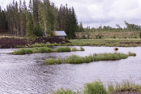 water treatment: Eutrophic freshwater pond at a water treatment wetland in Finland