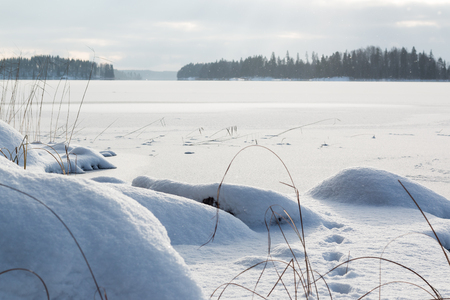 Withered plants at the snowy shore of a frozen lake with light snow falling in the background. Stock Photo