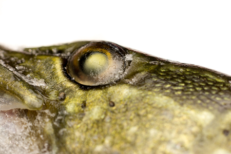 Eye and neck of a frozen pike