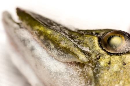 Jaw and eye of a frozen pike