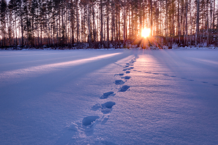 Footprints in snow leading towards sunset HDR shot