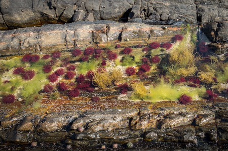 Colourful algae and sea anemones in shallow water