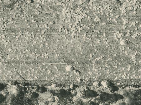 Toned background of marine creatures on stone