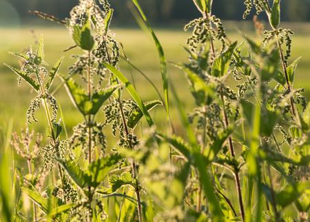 Dense weed and nettle vegetation