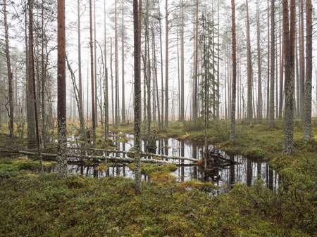 Puddle of flooding water in wetland forest Stock Photo