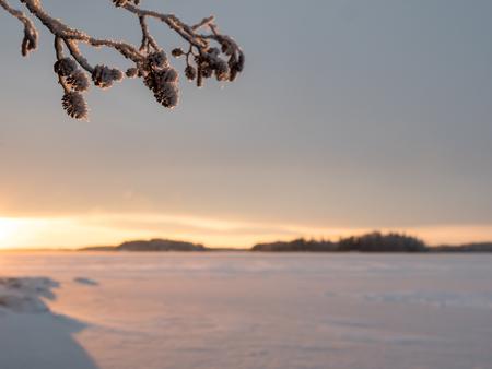 Alder cones with blurry winter landscape background Stock Photo - 118906456