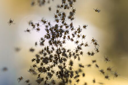 Baby spiders Reklamní fotografie
