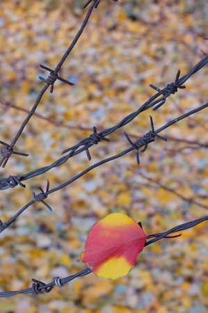 Leaf got entangle in barblock