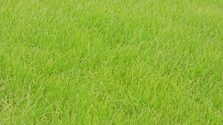 Green grass background. Soft focus Stock Photo