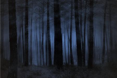 夜に不気味な霧の森