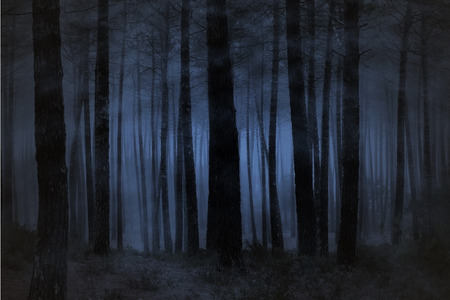 spook: Spooky foggy forest at night Stock Photo