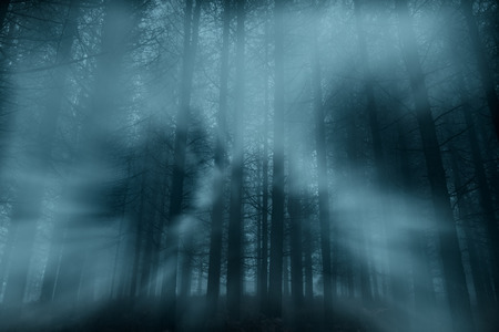 Spooky foggy forest at night or dusk with light rays