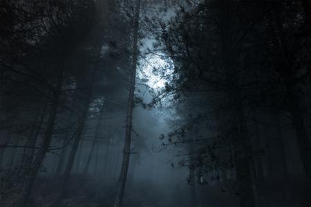 Mysterious foggy full moon pinewood photo