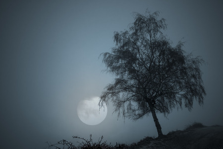 Tree at the edge of an abyss flanked by a mountain road on full moon night Stock Photo