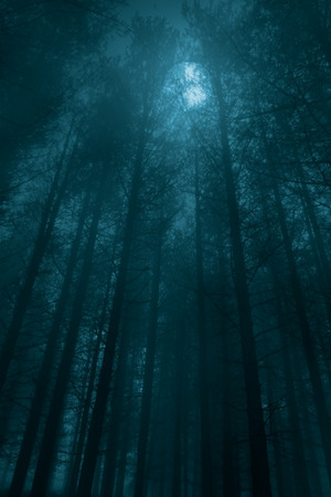 scary forest: Foggy forest in a full moon night