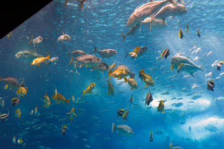 Colorful tropical fishes of the Lisbon Oceanarium during nourishment  photo