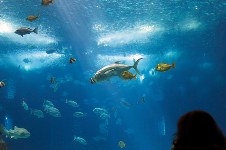 oceanarium: Lisbon, Portugal - March 3, 2014: Colorful tropical fishes of the Lisbon Oceanarium