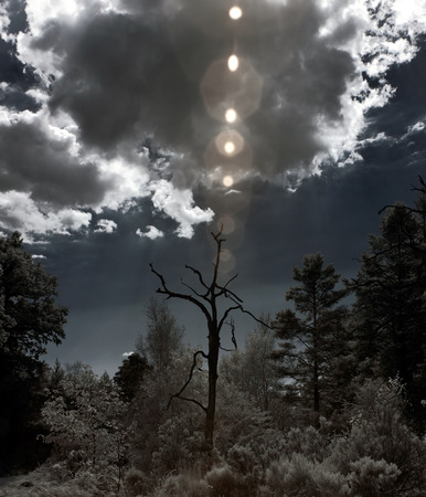 Dead tree with natural flare against strong cloudy sky. Infrared. photo