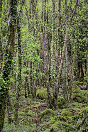 north woods: Deep woods from Peneda Geres National Park, north of Portugal Stock Photo