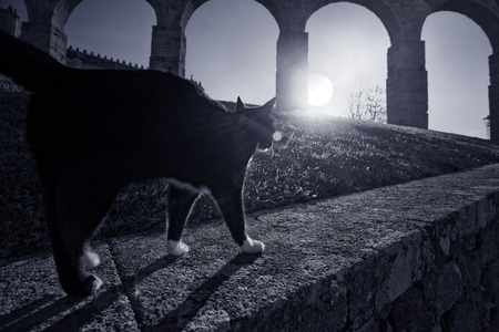 Black cat passing on a wall next to a medieval area of the old Europe photo