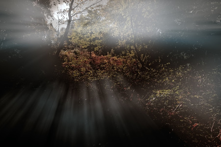 dense forest: Full moon rising from behind a mysterious European dense forest with moonbeams Stock Photo