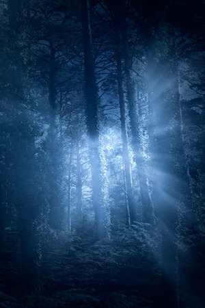 forest trees: Mysterious european forest with light rays ( used analog and digital filters) Stock Photo