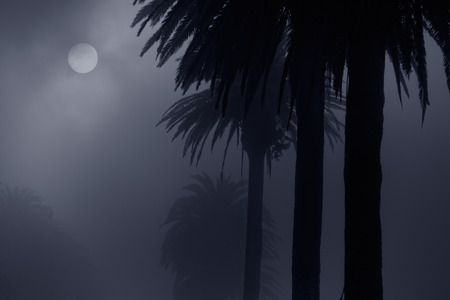 mystery woods: Mysterious foggy park in a full moon night. Added some digital noise.