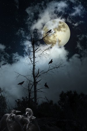 Full moon night with crows Stock Photo