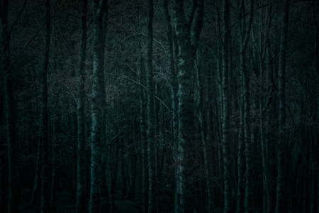 Dense dark forest at night. North of Portugal. Used some digital filters.