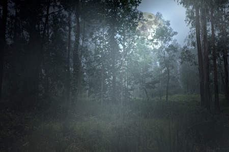 Arising moon behind a misty forest at dusk Stock Photo