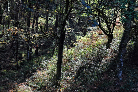 north woods: Dense woods from Peneda Geres National Park, north of Portugal.