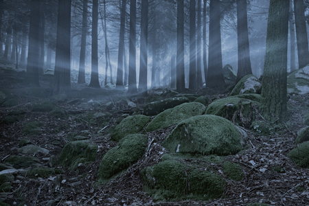 moss: Magic foggy forest at dusk with light rays and rocks covered with moss in the foreground Stock Photo