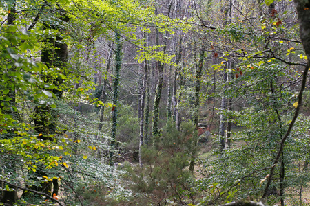 north woods: Early autumn in a deep woods from Peneda Geres National Park, north of Portugal
