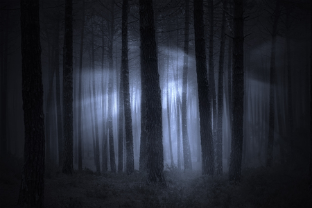 Spooky foggy forest at night or dusk with light beams Stock Photo