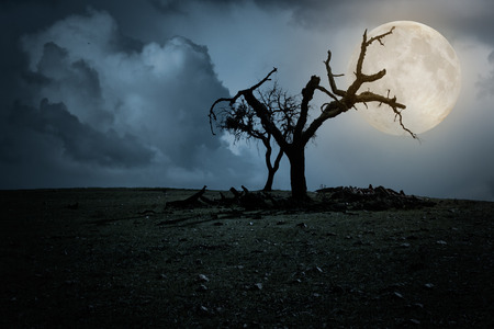 Halloween night background with full moon and spooky naked tree