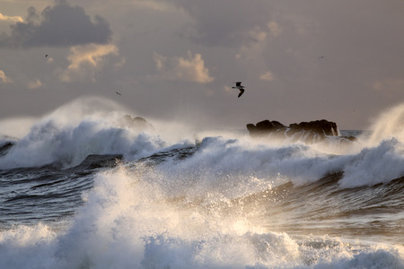 Sea storm with big breaking waves in a winter sunset. Northern portuguese coast. Stock Photo