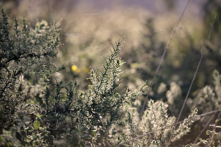 shallow dof: Backlit European meadow. End of the day light. Shallow DOF. Stock Photo
