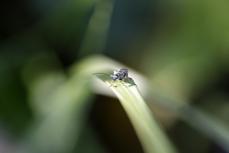 extreme close up: Tiny green insect macro. Shallow depth of field.
