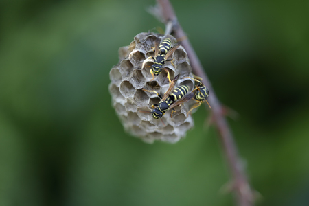 northern light: Wasp nest in a northern portuguese meadow. End of the day light.